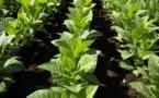 L'industrie française du tabac s'éteint en silence
